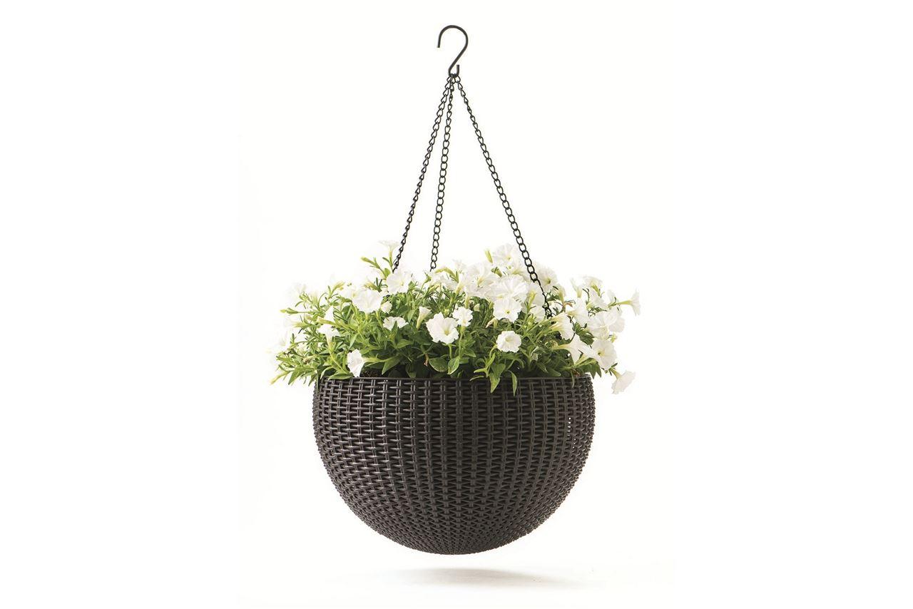 Цветы для подвесных кашпо на улице и описание